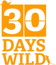 30DAYSWILD_ID2 lightorange