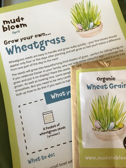 Mud and Bloom Wheatgrass 2